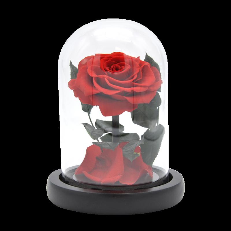 Rose éternelle sous cloche rouge - 16 cm - Autour d'Elle