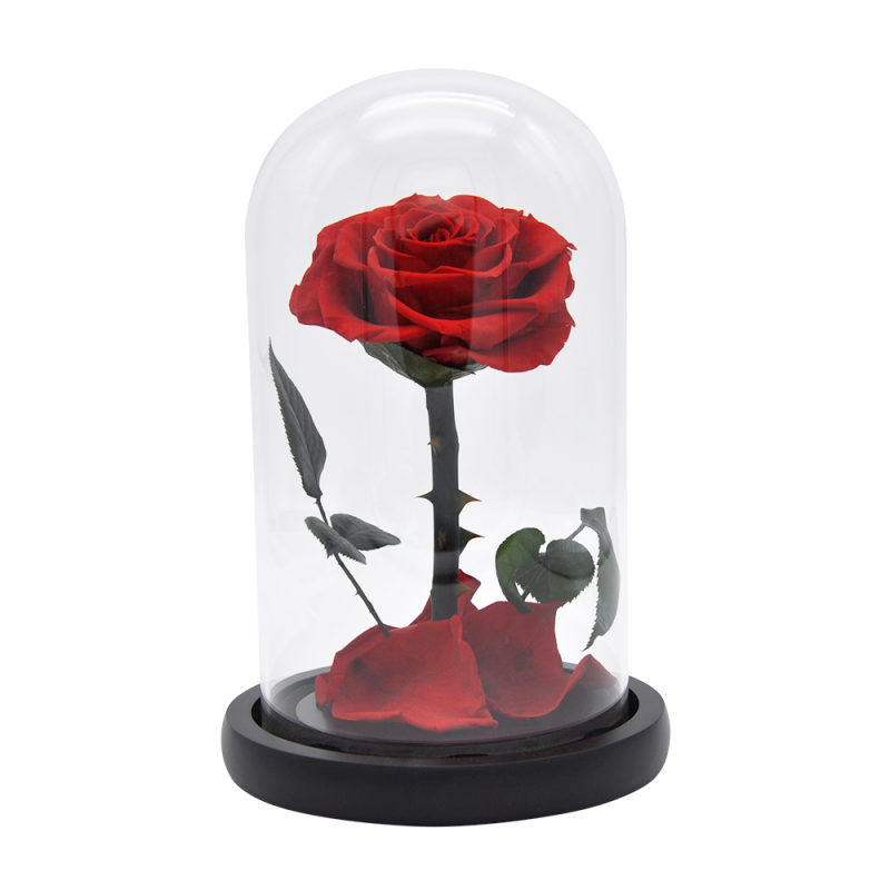 Rose éternelle rouge sous cloche - 23 cm - Autour d'Elle