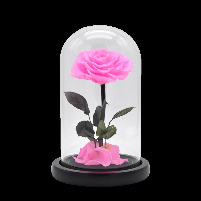 Rose éternelle rose sous cloche - 23 cm - Autour d'Elle