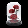 Rose éternelle sos cloche avec 3 roses rouge - Autour d'Elle