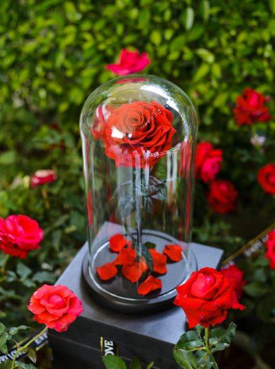 offrir rose éternelle