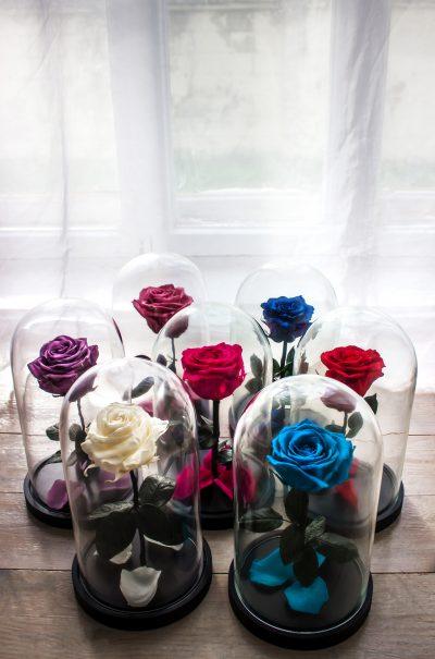 rose éternelle prix