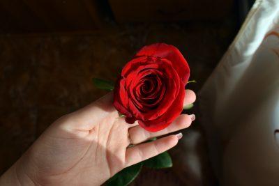 rose naturelle stabilisée